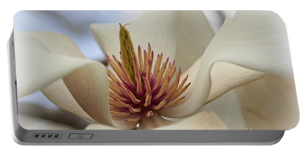 Star Magnolia Portable Battery Charger featuring the photograph Star Magnolia by Benanne Stiens