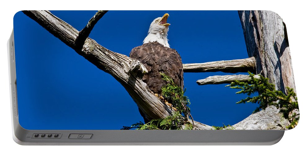 Animals Portable Battery Charger featuring the photograph Squawking Alaskan Eagle by Jean Noren