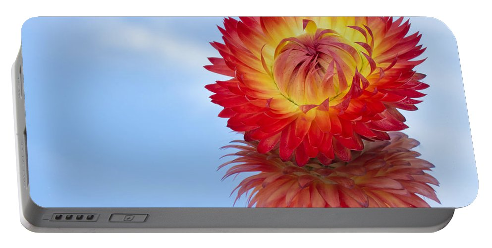 Abstract Portable Battery Charger featuring the photograph Strawflower Reflection by Heidi Smith