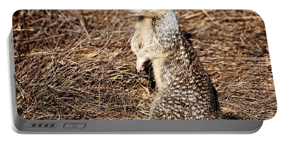 Squirrel Portable Battery Charger featuring the photograph Strike A Squirrelly Pose by Eric Tressler