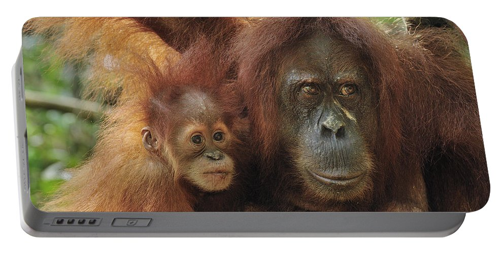 Mp Portable Battery Charger featuring the photograph Sumatran Orangutan Pongo Abelii Mother by Thomas Marent