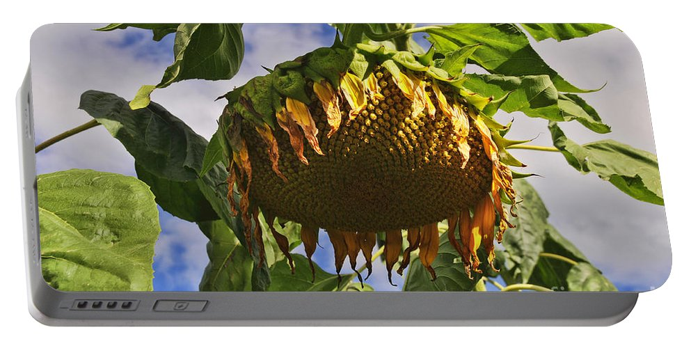 Sunflower Portable Battery Charger featuring the photograph Sunflower At Fall by David Arment