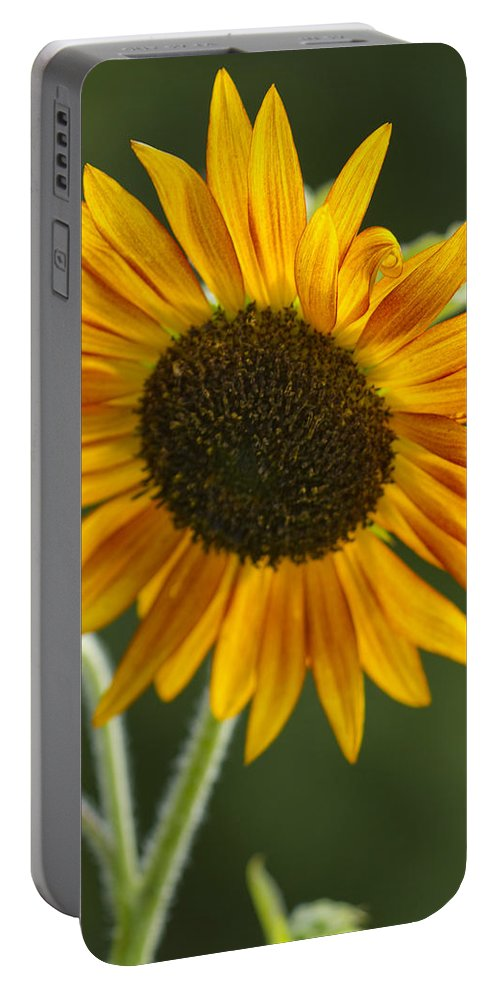 Sunflower Portable Battery Charger featuring the photograph Sunflower by Kathy Clark