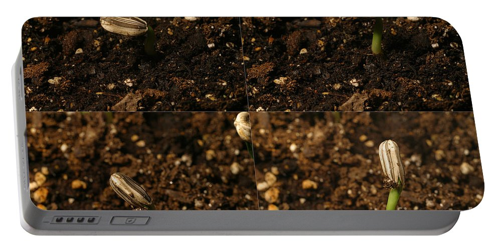 Plant Portable Battery Charger featuring the photograph Sunflower Seedling Growth Sequence by Ted Kinsman