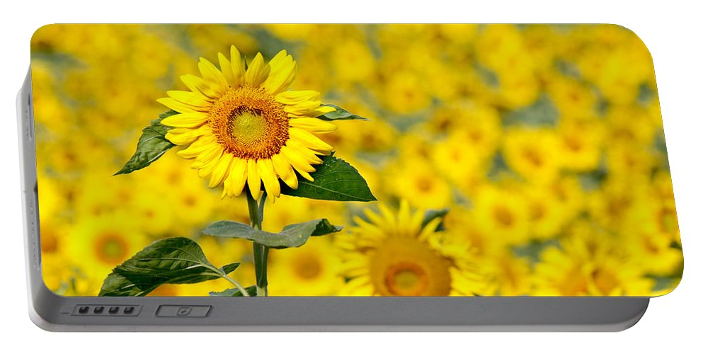 Wildflower Portable Battery Charger featuring the photograph Sunny Disposition by Bill Pevlor
