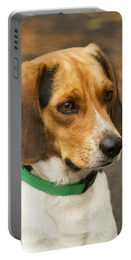 Beagle Portable Battery Charger featuring the photograph Sweet Little Beagle Dog by Kathy Clark