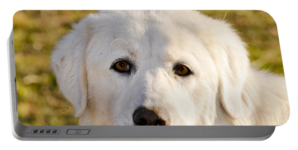 Dog Portable Battery Charger featuring the photograph Sweetie In The Boonies by Trish Tritz