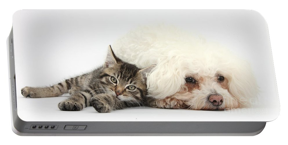Nature Portable Battery Charger featuring the photograph Tabby Kitten And Bichon Fris� by Mark Taylor