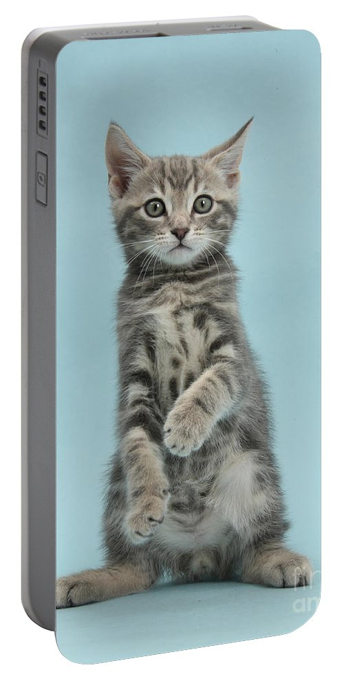 Nature Portable Battery Charger featuring the photograph Tabby Kitten Sitting Up by Mark Taylor
