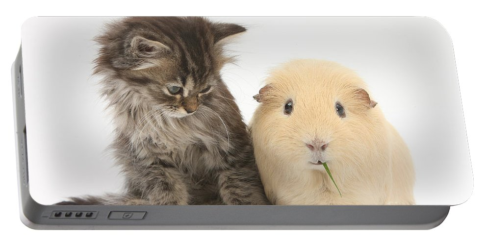 Nature Portable Battery Charger featuring the photograph Tabby Kitten With Yellow Guinea Pig by Mark Taylor