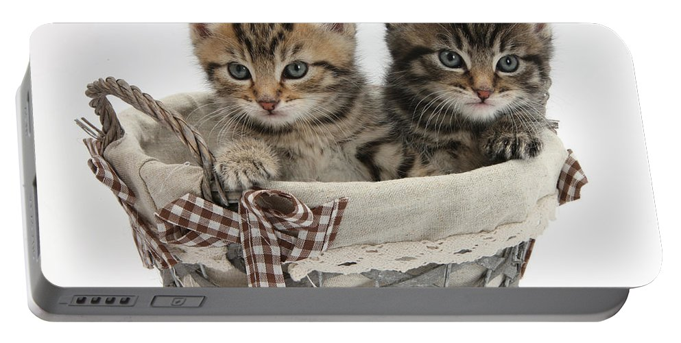 Nature Portable Battery Charger featuring the photograph Tabby Kittens In A Basket by Mark Taylor
