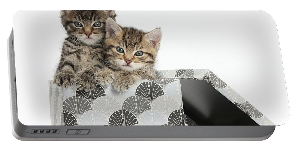 Nature Portable Battery Charger featuring the photograph Tabby Kittens In Gift Box by Mark Taylor
