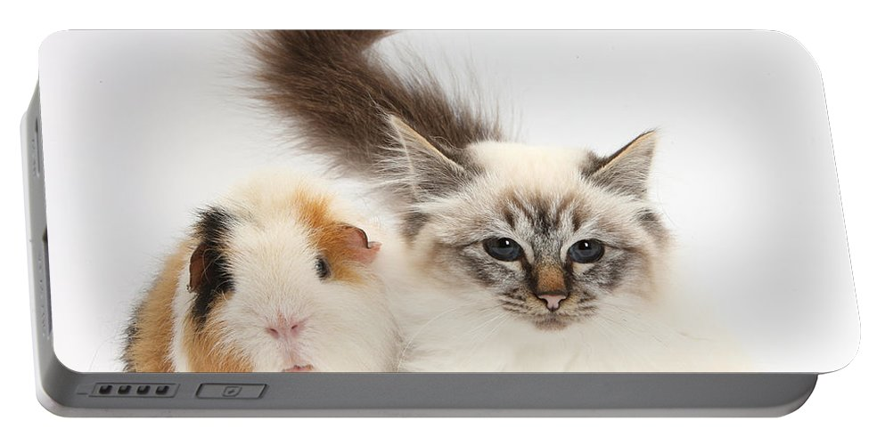 Nature Portable Battery Charger featuring the photograph Tabby-point Birman Cat And Guinea Pig by Mark Taylor