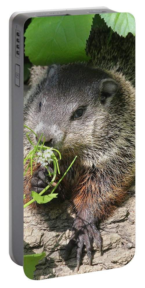 Woodchuck Portable Battery Charger featuring the photograph Taking Time To Smell The Flowers by Doris Potter