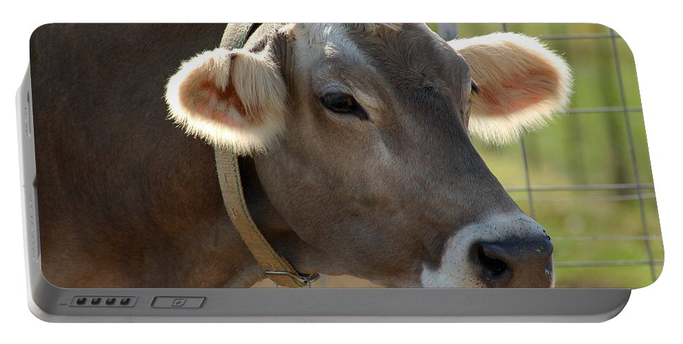 Animals Portable Battery Charger featuring the photograph Talking Cow by LeeAnn McLaneGoetz McLaneGoetzStudioLLCcom