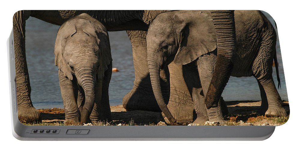 Focussed Portable Battery Charger featuring the photograph Tall And Short by Alistair Lyne