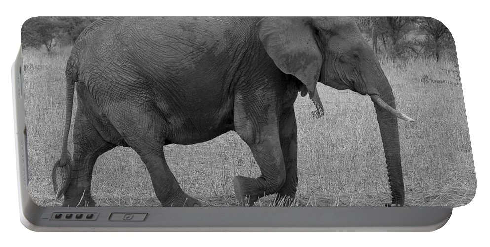 Africa Portable Battery Charger featuring the photograph Tarangire Elephant On Road by Darcy Michaelchuk