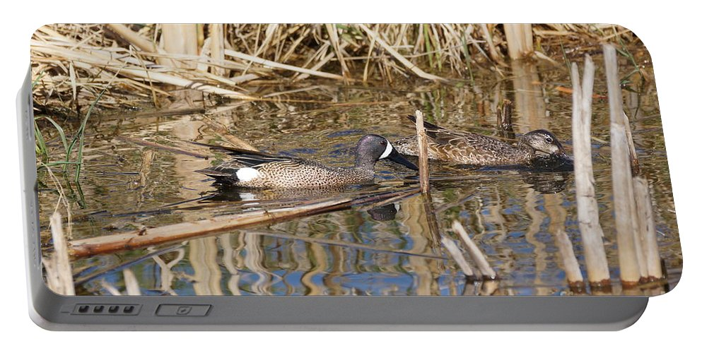 Teal Portable Battery Charger featuring the photograph Teal Swiming Along Cattails by Lori Tordsen