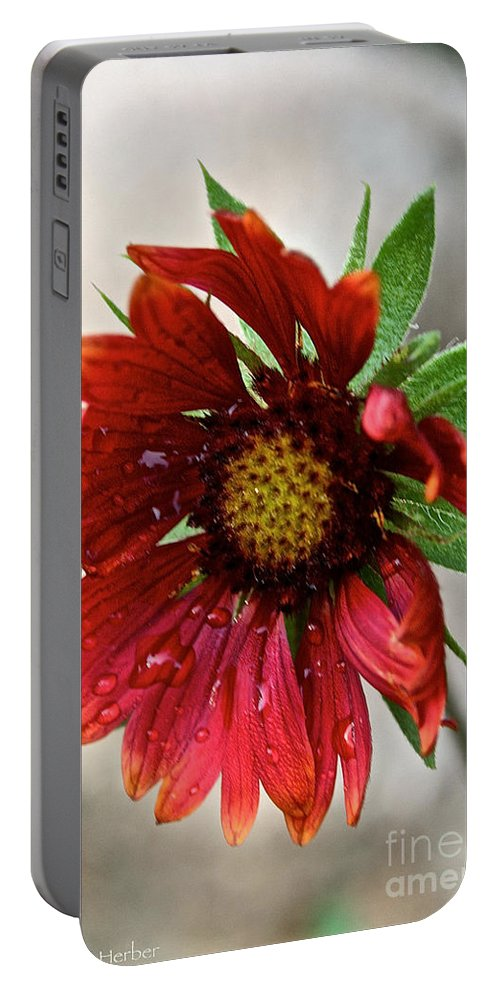 Plant Portable Battery Charger featuring the photograph Teary Gaillardia by Susan Herber