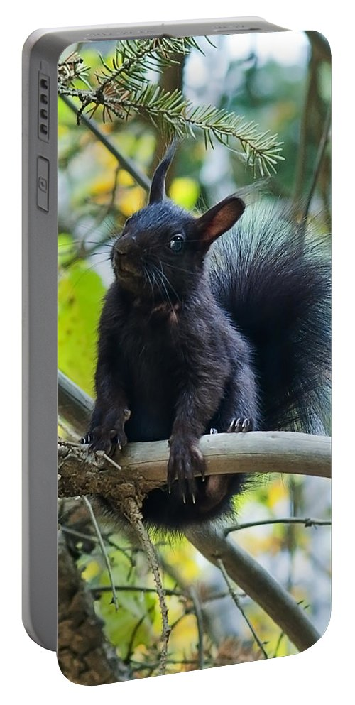 Squirrel Portable Battery Charger featuring the photograph The Black Abert's Squirrel by Beth Riser