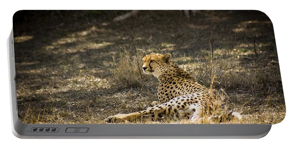 Africa Portable Battery Charger featuring the photograph The Cheetah Wakes Up by Darcy Michaelchuk