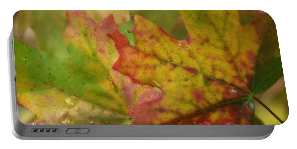 Maple Leaves Portable Battery Charger featuring the photograph The Colors Of Fall by Saija Lehtonen