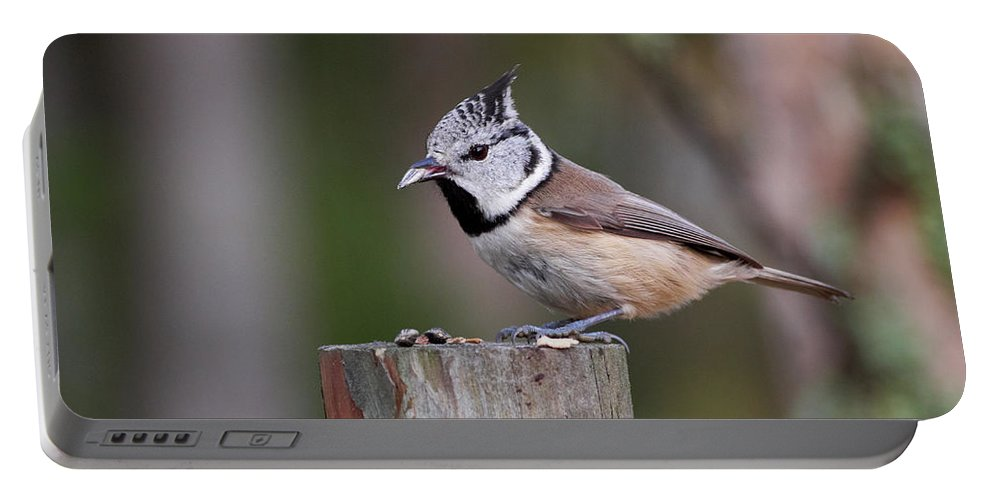 Lehtokukka Portable Battery Charger featuring the photograph The Crested Tit Having Lunch by Jouko Lehto