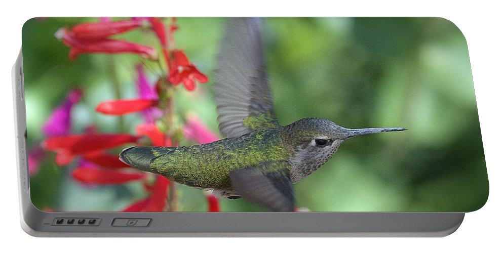 Annas Hummingbird Portable Battery Charger featuring the photograph The Get Away by Saija Lehtonen