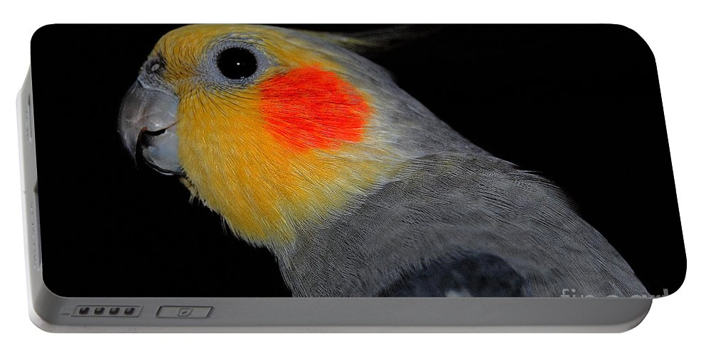Cockatiel Portable Battery Charger featuring the photograph The Grizwald by Rob Hawkins