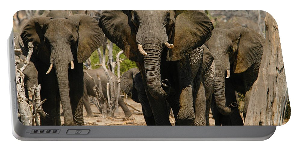 Action Portable Battery Charger featuring the photograph The Herd by Alistair Lyne