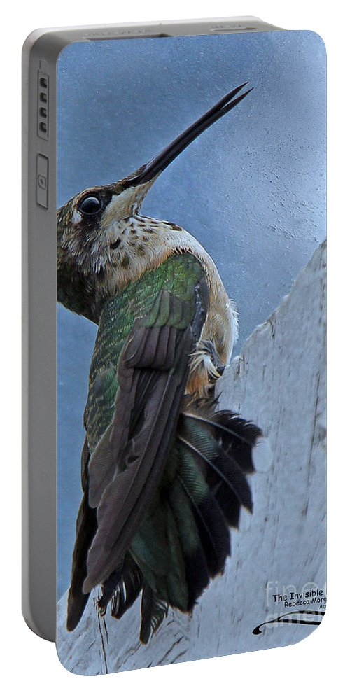 Hummingbird Portable Battery Charger featuring the photograph The Invisible Barrier 2 by Rebecca Morgan
