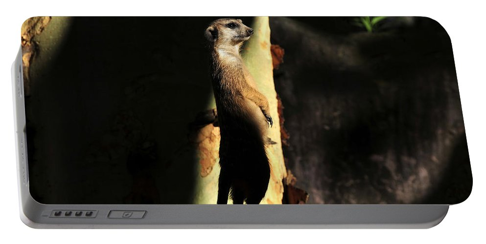 Wildlife Photography Portable Battery Charger featuring the photograph The Meerkats Perch by David Lee Thompson