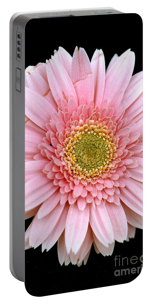 Flower Portable Battery Charger featuring the photograph The Pink Flower by Mike Nellums