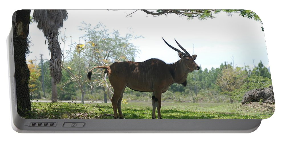 Animal Portable Battery Charger featuring the photograph The Postcard by Rob Hans