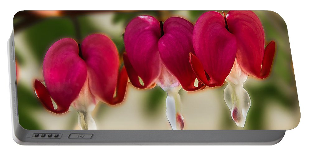 Bleeding Hearts Portable Battery Charger featuring the photograph The Red Heart by Robert Bales