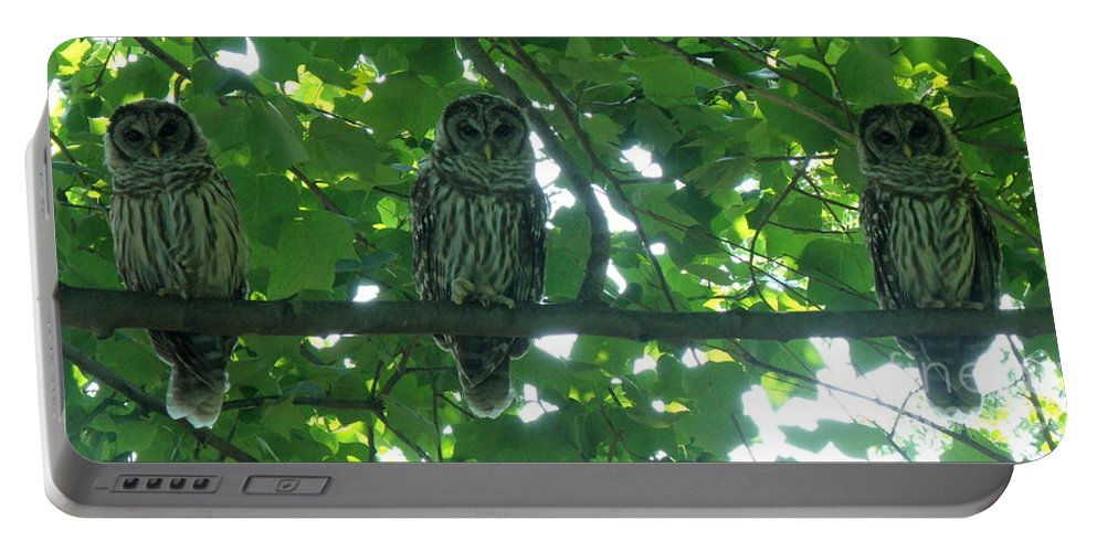 Owls Portable Battery Charger featuring the photograph Three Barred Owls by Lainie Wrightson