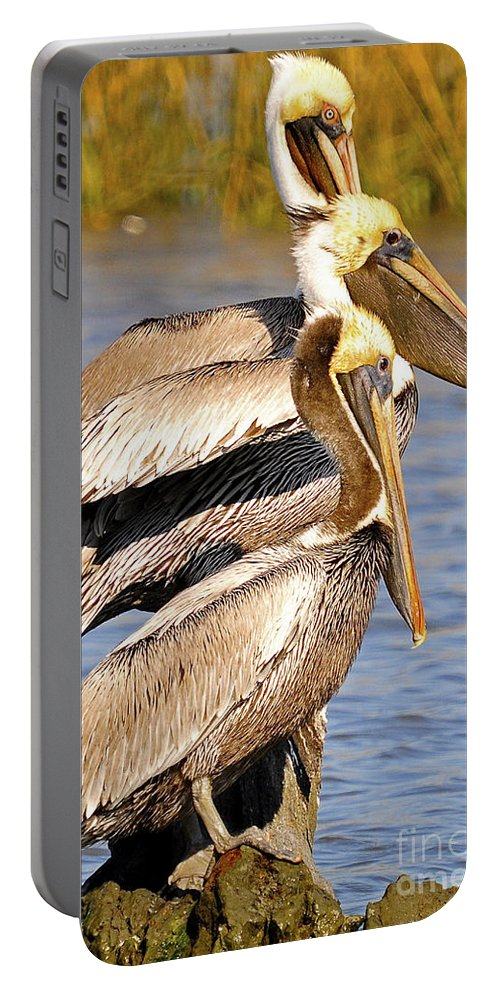 Pelican Portable Battery Charger featuring the photograph Three Pelicans On A Stump by TJ Baccari