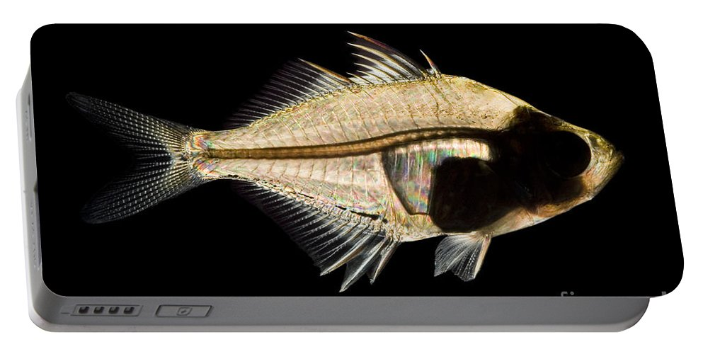 Animal Portable Battery Charger featuring the photograph Tibetan Glassfish by Raul Gonzalez Perez