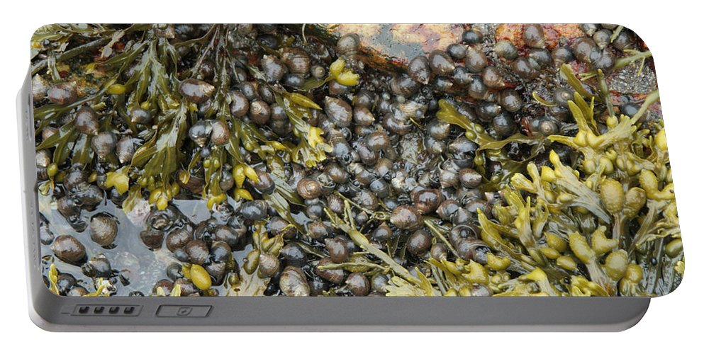 Maine Coast Portable Battery Charger featuring the photograph Tidal Pool With Rockweed by Ted Kinsman