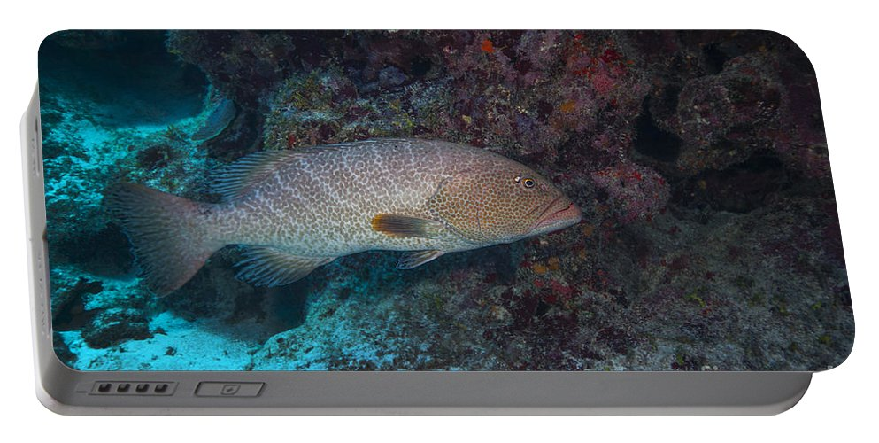 Sea Life Portable Battery Charger featuring the photograph Tiger Grouper Swimming Along The Bottom by Michael Wood