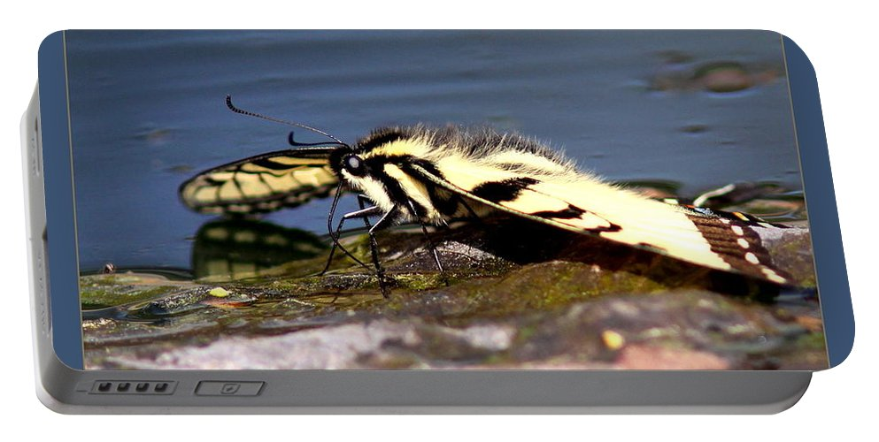 Tiger Swallowtail Butterfly Portable Battery Charger featuring the photograph Tiger Swallowtail Butterfly by Travis Truelove