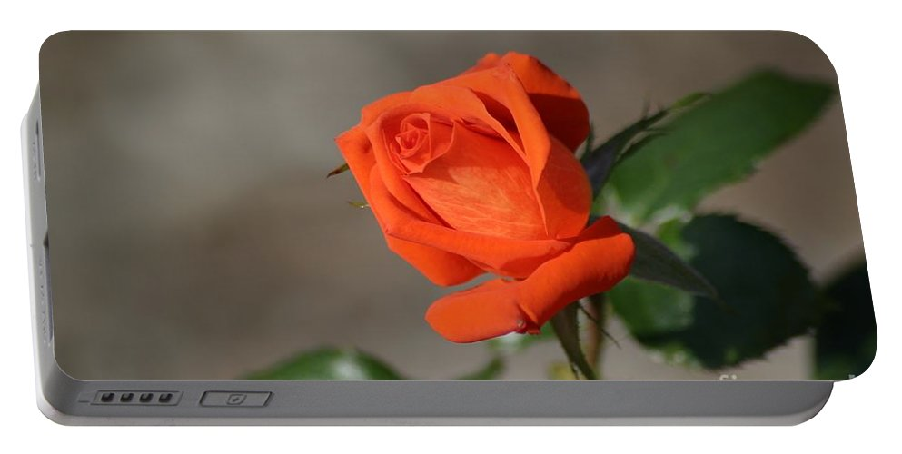 Roses Portable Battery Charger featuring the photograph Time For Some Tropicana by Living Color Photography Lorraine Lynch