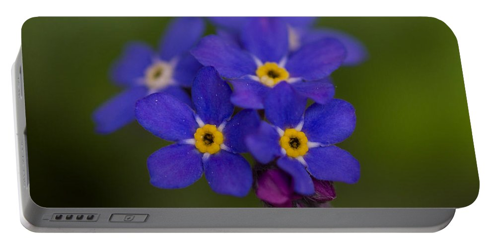 Nature Portable Battery Charger featuring the photograph Tiny Blossoms by Andreas Levi