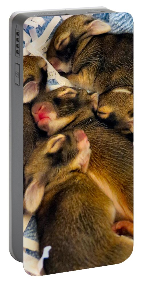 Bunny Portable Battery Charger featuring the photograph Tiny Bunnies by Art Dingo