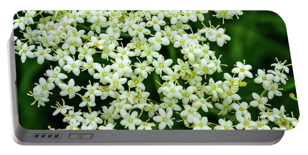 Flowers Portable Battery Charger featuring the photograph Tiny Flowers by Shannon Harrington
