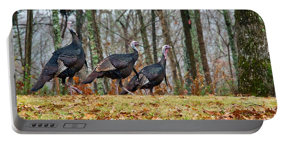 Tom Portable Battery Charger featuring the photograph Tom Turkeys All In A Row 1 by Douglas Barnett