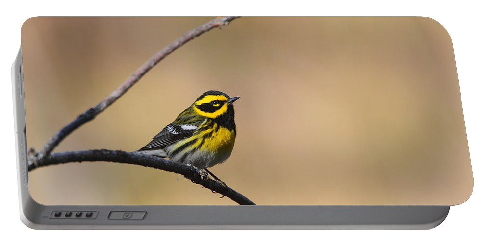 Doug Lloyd Portable Battery Charger featuring the photograph Townsends Warbler by Doug Lloyd
