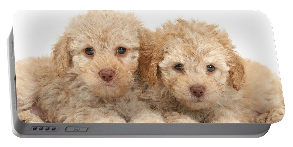 Nature Portable Battery Charger featuring the photograph Toy Labradoodle Puppies by Mark Taylor