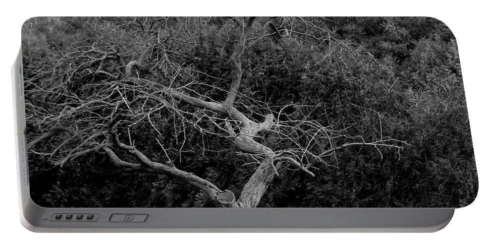 Dance Portable Battery Charger featuring the photograph Tree Dancer by Shelley Blair