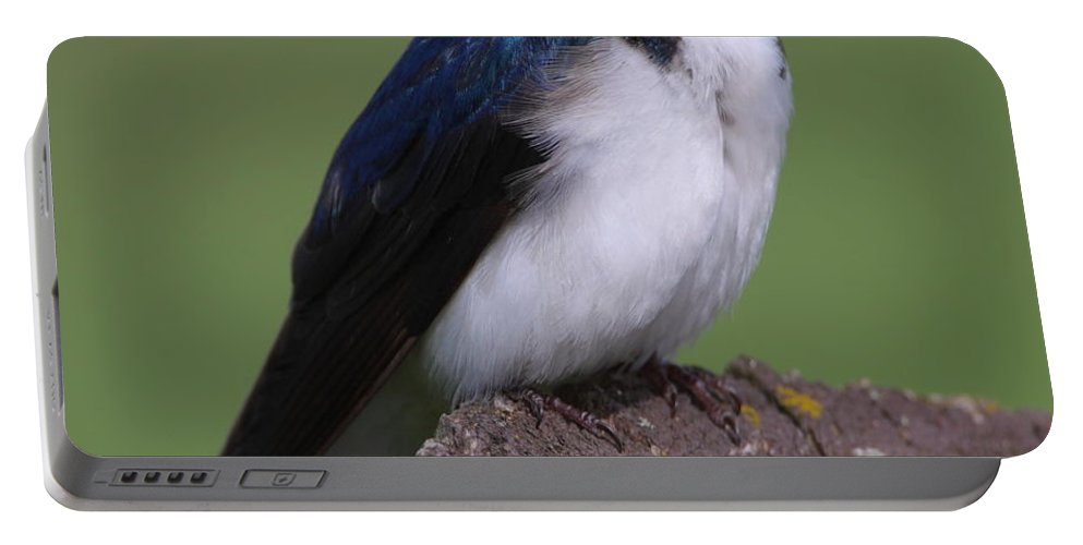 Swallow Portable Battery Charger featuring the photograph Tree Swallow by Bruce J Robinson
